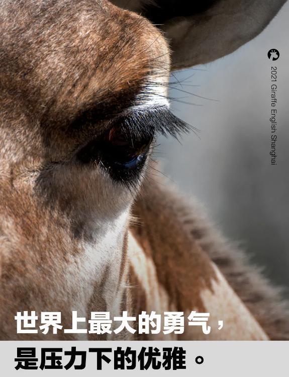 世界上最大的勇气,是压力下的优雅;【长颈鹿美语】请大家严格遵守防疫要求,做好防疫措施;